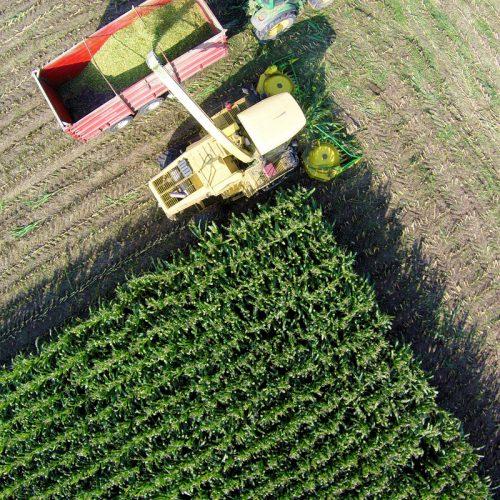 Imagem aérea Silagem de milho